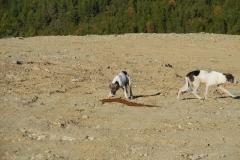 Müllhunde-4