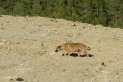 Müllhunde-7
