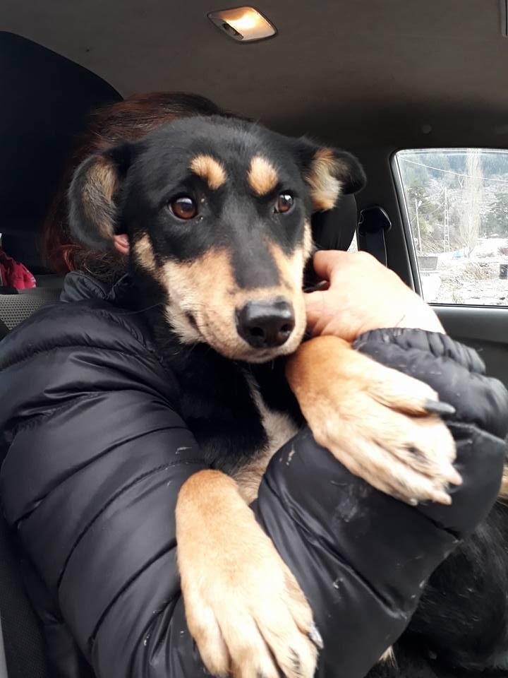 tierschutzverein santorini hunde