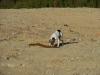 Müllhunde-1