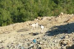 Müllhunde-2
