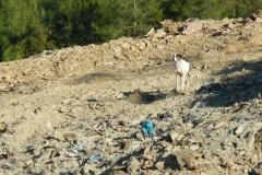 Müllhunde-8