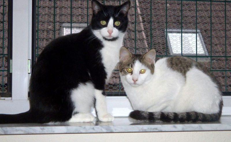 Pino und Momo