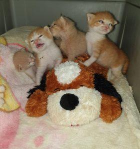 4 Katzenbabys