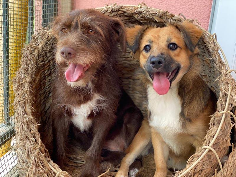 Trixi und Svenja
